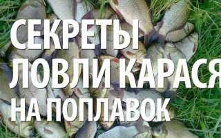 Поплавочная рыбалка на карася