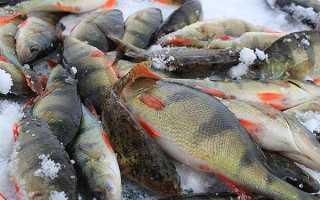 Приготовление теста из манки для рыбалки