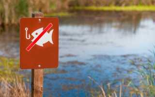 Штрафы за нарушения правил рыболовства