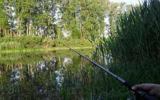 Ловля судака летом