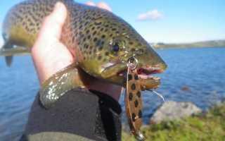 Феромоны для рыбалки своими руками