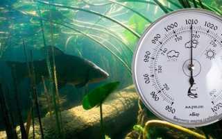 При каком давлении ловится рыба