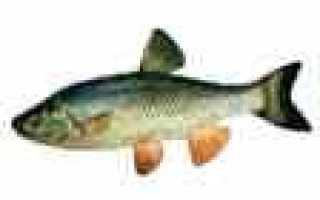 Рыбный календарь клева на неделю