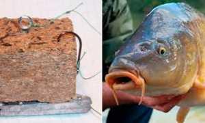 Рыбалка на макушатник