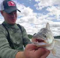 Отчеты о рыбалке на оке