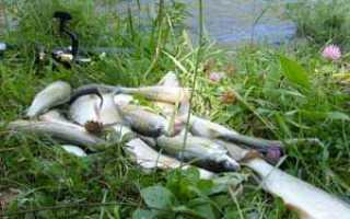 Рыбалка на хариуса в красноярске