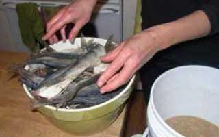 Сколько дней солить рыбу перед сушкой