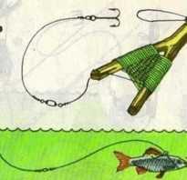Ловля судака с берега на живца