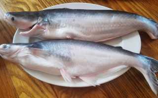 Пангасиус жирная рыба или нет