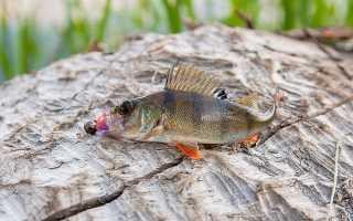 Окунь рыбалка