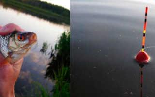 Оснастка поплавочной удочки для ловли плотвы