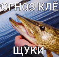 Прогноз для рыбалки на неделю
