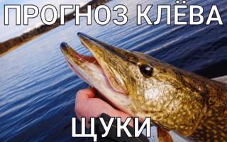 Прогноз на завтра рыбалка