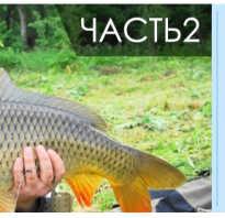 Монтаж фидерной снасти